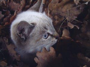 gattino arrabbiato emerge dalle foglie