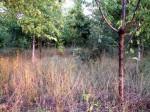 bosco giovane con erbacce