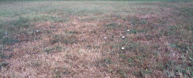 erba secca in estate, siccità