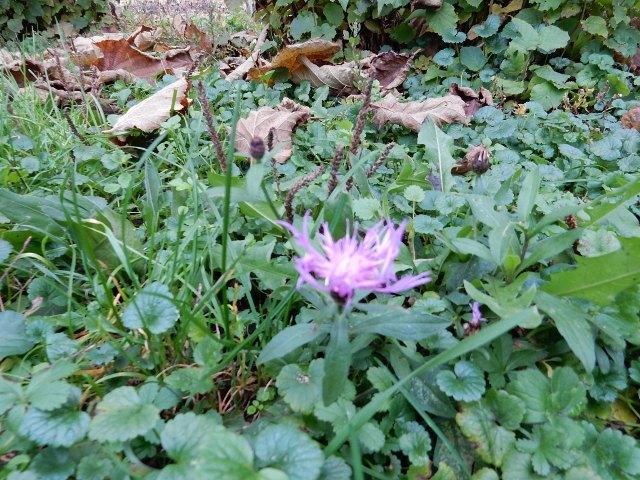 fiore viola nei prati d'autunno